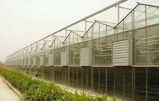 Строительство промышленных теплиц
