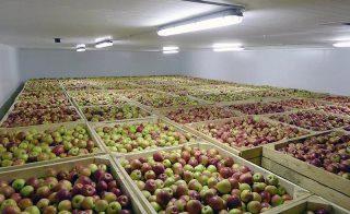 Строительство фруктохранилищ в Екатеринбурге